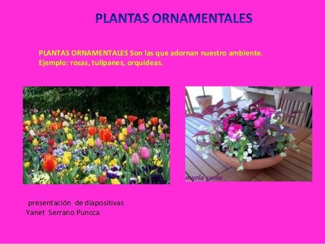 Sesion 2 clasificacion de planta for 6 plantas ornamentales