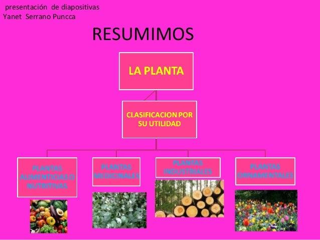 Sesion 2 clasificacion de planta for Concepto de plantas ornamentales