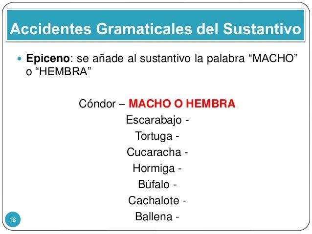 """18  Epiceno: se añade al sustantivo la palabra """"MACHO"""" o """"HEMBRA"""" Cóndor – MACHO O HEMBRA Escarabajo - Tortuga - Cucarach..."""