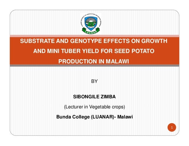 BY SIBONGILE ZIMBA (Lecturer in Vegetable crops) Bunda College (LUANAR)- Malawi 1 SUBSTRATE AND GENOTYPE EFFECTS ON GROWTH...