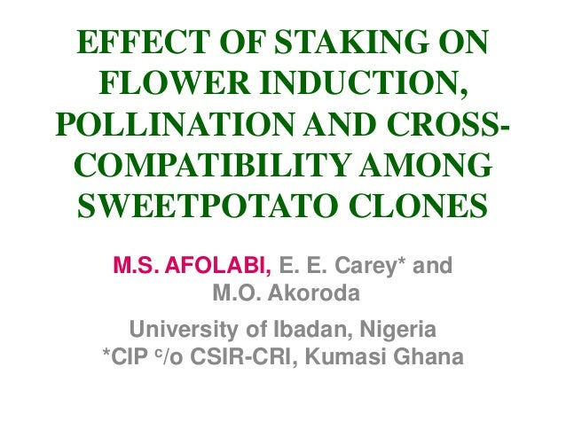 EFFECT OF STAKING ON FLOWER INDUCTION, POLLINATION AND CROSS- COMPATIBILITY AMONG SWEETPOTATO CLONES M.S. AFOLABI, E. E. C...