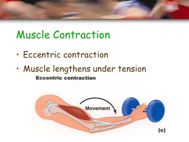 muscle contractions Muscle physiology dr ebneshahidi  hormones and stretching affect smooth muscle contractions  7 can contract for a long period of time  smooth muscle contraction.