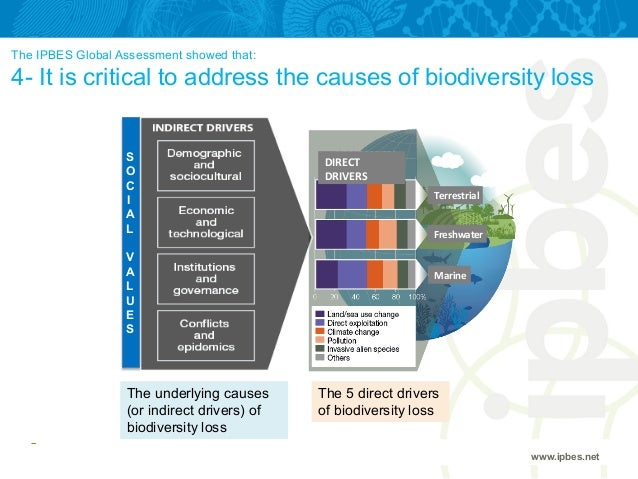 The IPBES Global Assessment showed that: 4- It is critical to address the causes of biodiversity loss The 5 direct drivers...