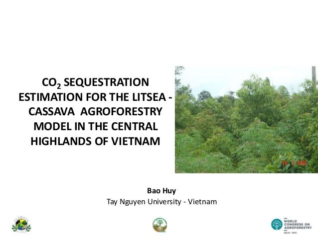 CO2 SEQUESTRATION ESTIMATION FOR THE LITSEA - CASSAVA AGROFORESTRY MODEL IN THE CENTRAL HIGHLANDS OF VIETNAM Bao Huy Tay N...