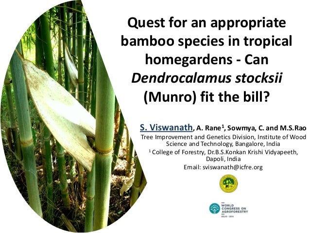 Quest for an appropriate bamboo species in tropical homegardens - Can Dendrocalamus stocksii (Munro) fit the bill? S. Visw...