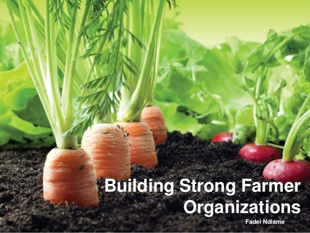 Building Strong Farmer Organizations