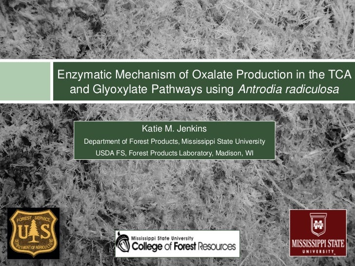 Enzymatic Mechanism of Oxalate Production in the TCA  and Glyoxylate Pathways using Antrodia radiculosa                   ...