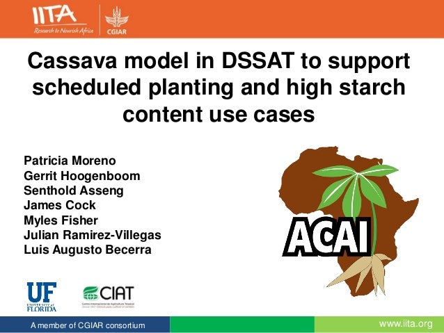 www.iita.orgA member of CGIAR consortium Cassava model in DSSAT to support scheduled planting and high starch content use ...