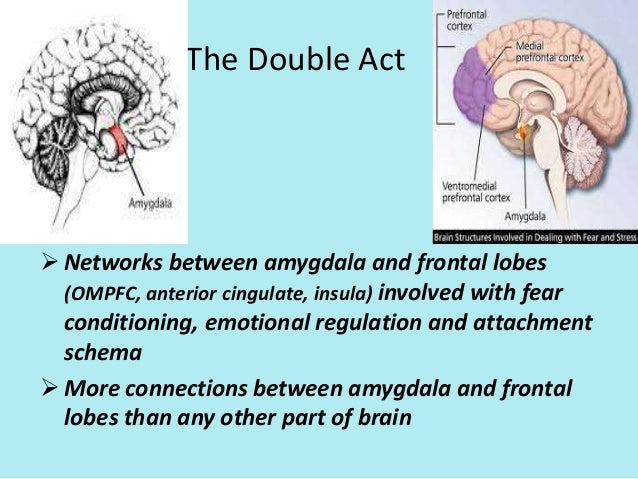 frontal lobe vs amygdala The amazing brain adventure, amygdala, frontal lobes, tickle your amygdala, how to paint a car, make a kindle, emotions, creativity, intelligence, pleasure, esp, paranormal, alleviate and stop depression and anxiety.