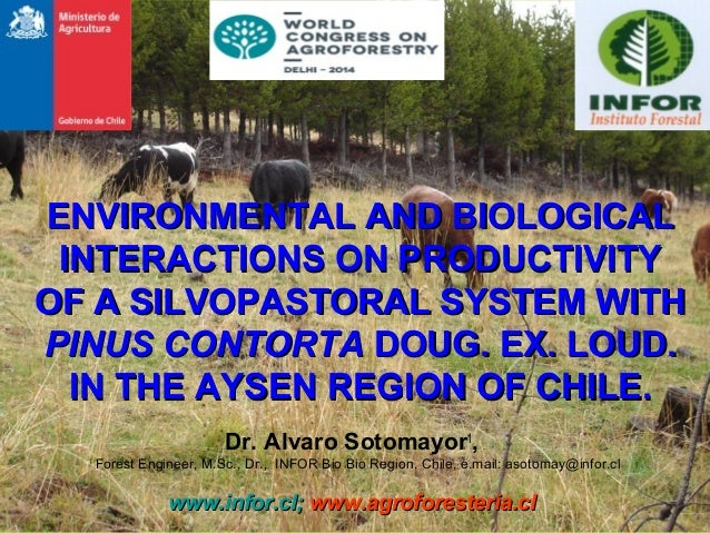 ENVIRONMENTAL AND BIOLOGICAL INTERACTIONS ON PRODUCTIVITY OF A SILVOPASTORAL SYSTEM WITH PINUS CONTORTA DOUG. EX. LOUD. IN...