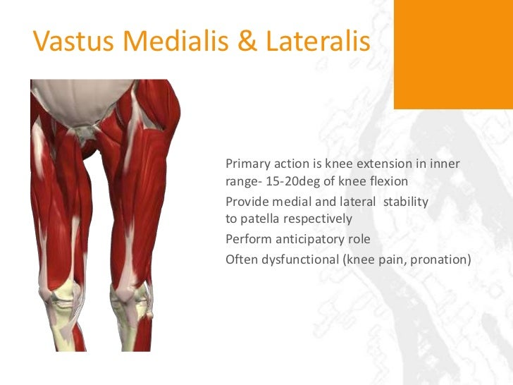 function of the hips The function of the gluteus medius muscle is to work with other muscles on the side of your hip to help pull your thigh out to the side in a motion called hip abductionthe gluteus medius also serves to rotate your thigh.