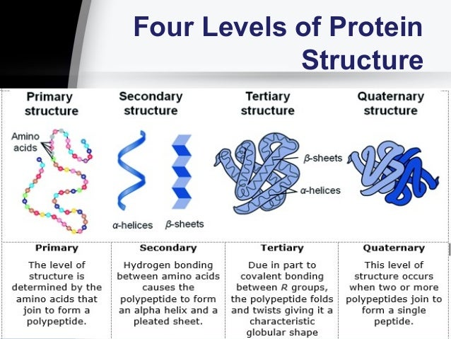 Session No  2 2  Biological Molecules Proteins And Enzymes