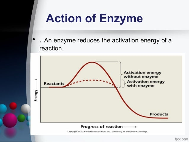 an analysis of the activity of enzymes biological catalysts produced by living cells Living cells contain  the most specialized proteins are enzymes and they act as biological catalysts  the catalytic activity of enzymes is highly.