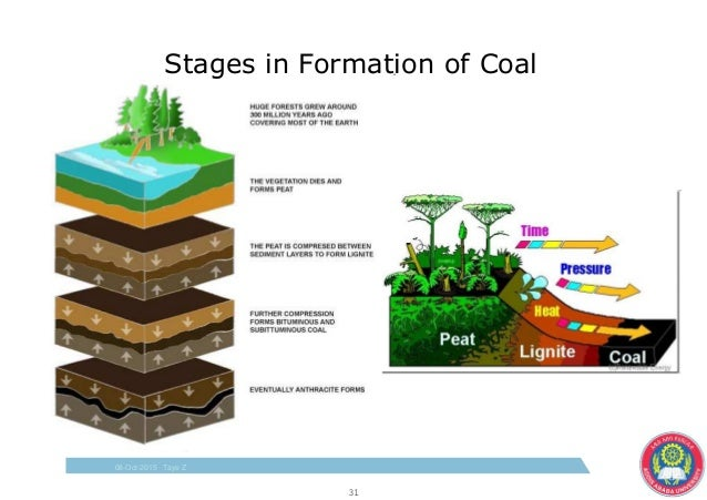 coal forming Home » petroleum » formation of coal, oil and gas formation of coal, oil and gas by owais khattak 5:10:00 pm 3 comments  coal-forming environments.