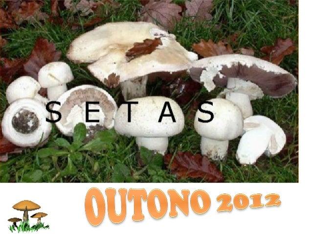 Os cogumelos ousetas son seresvivos, igual que osanimais ou asplantas, pero…non se parecen aningúns deles.