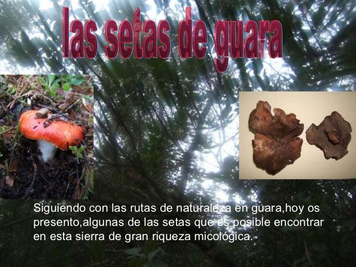 las setas de guara Siguiendo con las rutas de naturaleza en guara,hoy os  presento,algunas de las setas que es posible enc...