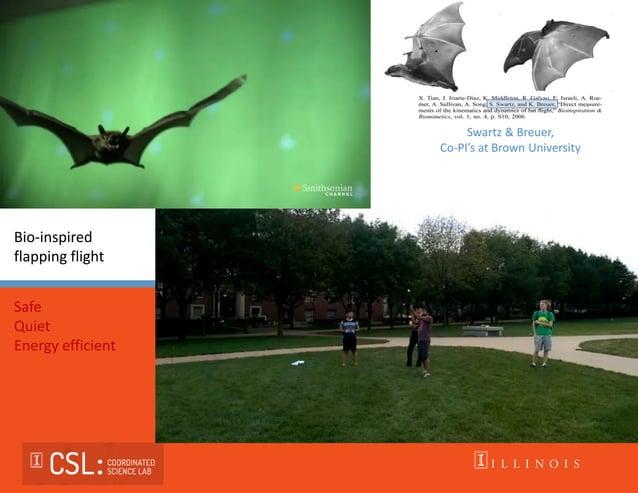 Swartz & Breuer, Co-PI's at Brown University Bio-inspired flapping flight Safe Quiet Energy efficient