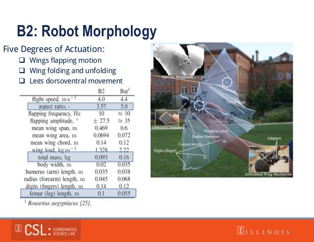 B2: Robot Morphology Five Degrees of Actuation:  Wings flapping motion  Wing folding and unfolding  Legs dorsoventral m...