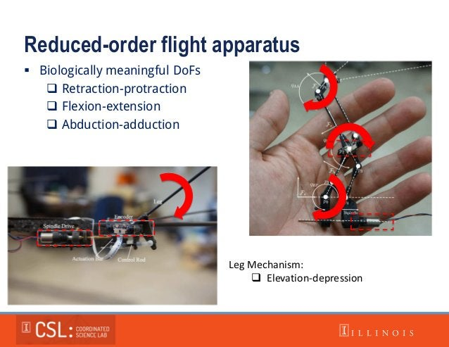 Reduced-order flight apparatus  Biologically meaningful DoFs  Retraction-protraction  Flexion-extension  Abduction-add...