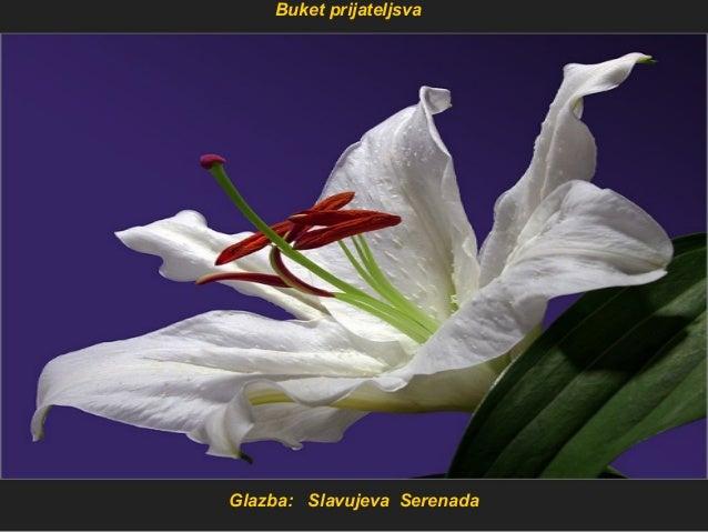 Glazba: Slavujeva Serenada Buket prijateljsva