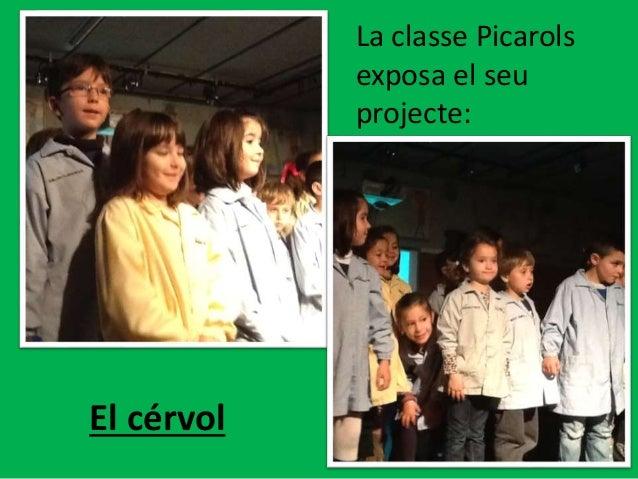 La classe Picarols exposa el seu projecte: El cérvol