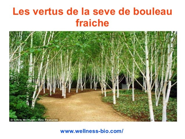 Les vertus de la seve de bouleau fraiche www.wellness-bio.com/