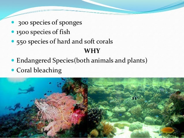  300 species of sponges  1500 species of fish  550 species of hard and soft corals WHY  Endangered Species(both animal...