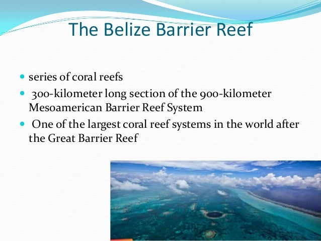 The Belize Barrier Reef  series of coral reefs  300-kilometer long section of the 900-kilometer Mesoamerican Barrier Ree...