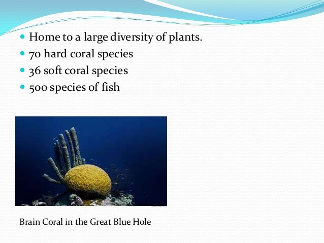  Home to a large diversity of plants.  70 hard coral species  36 soft coral species  500 species of fish Brain Coral i...