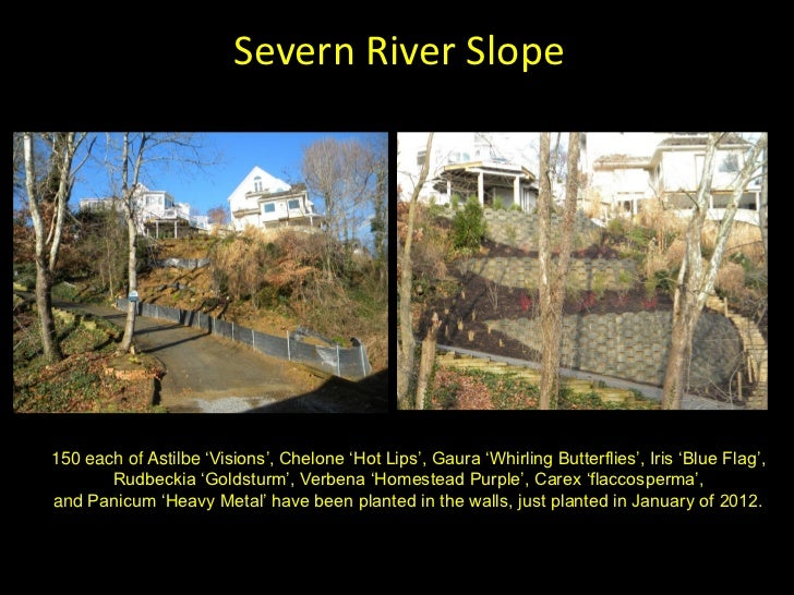 Severn River Slope150 each of Astilbe 'Visions', Chelone 'Hot Lips', Gaura 'Whirling Butterflies', Iris 'Blue Flag',      ...