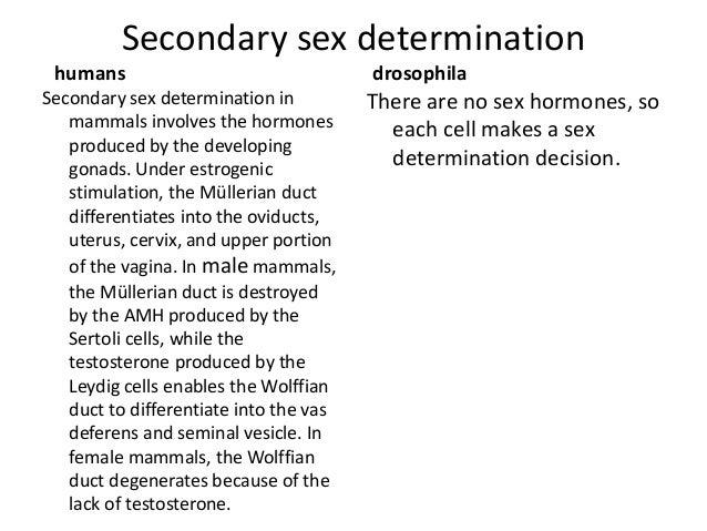 Mammals sex determination