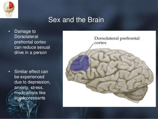 Effects of masturbation on brain mood