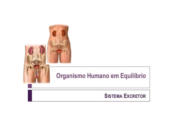 Organismo Humano em Equilíbrio                SISTEMA EXCRETOR