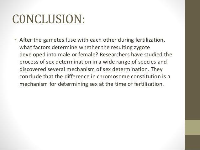 Sex chromosomes conclution