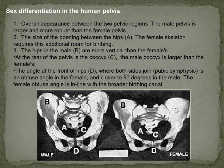 Determination Of Sex 81