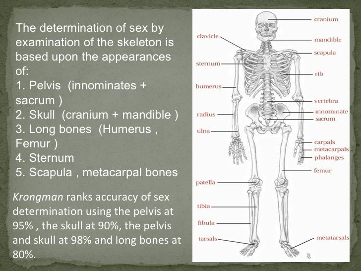 Sexual dimorphism in human pelvis