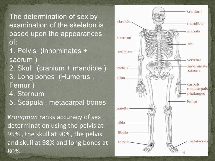 Sexual dimorphism in human skeleton