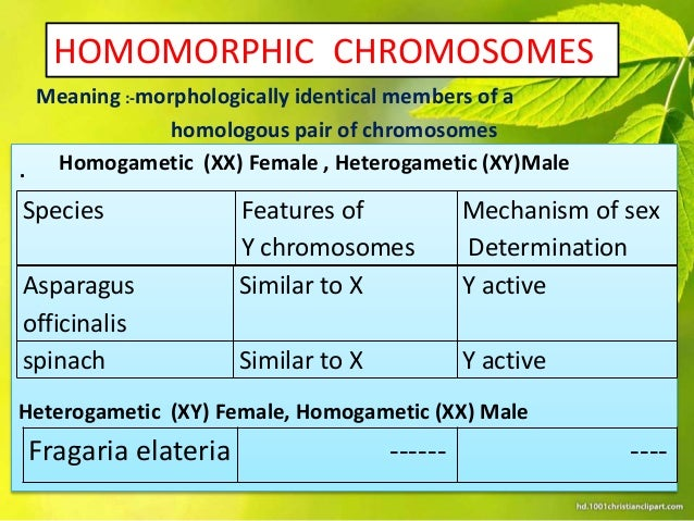 homomorphic sex chromosome definition in Caledon