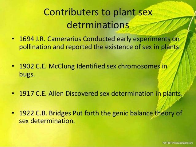 Sex determination in flowering plants