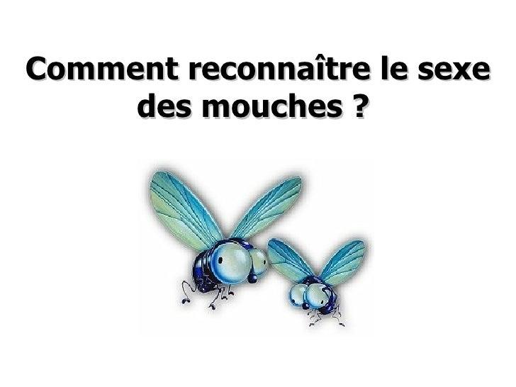 Comment reconnaître le sexe des mouches ?