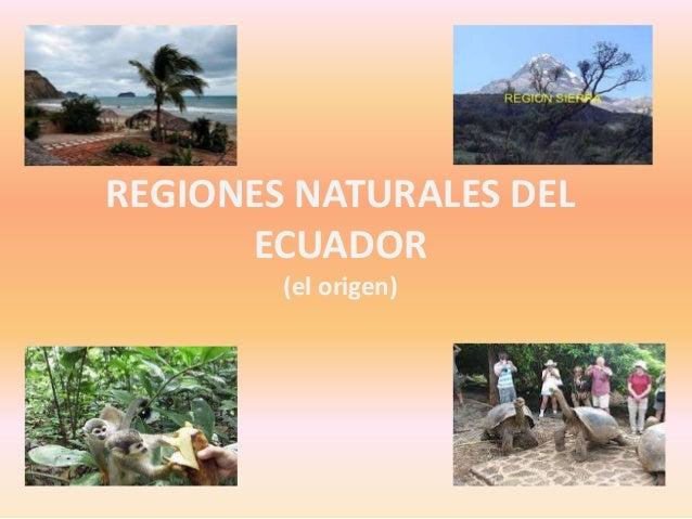 Sexto 1 regiones naturales del ecuador - Ambientadores naturales para la casa ...