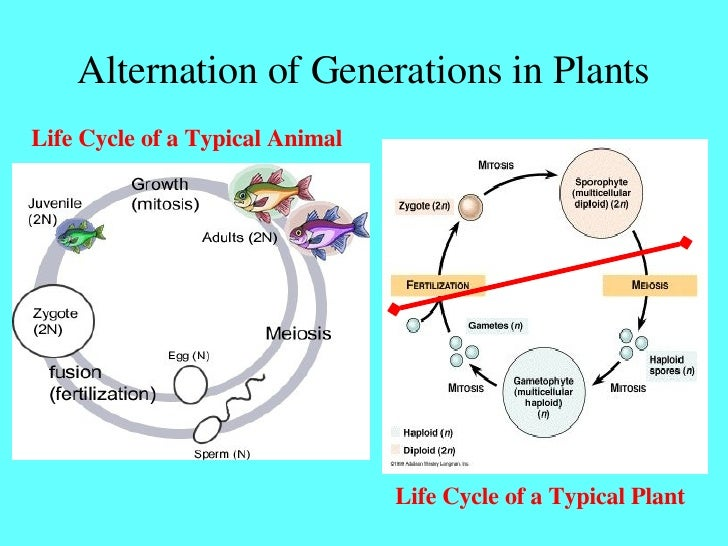 Sexual reproduction in plants cycle