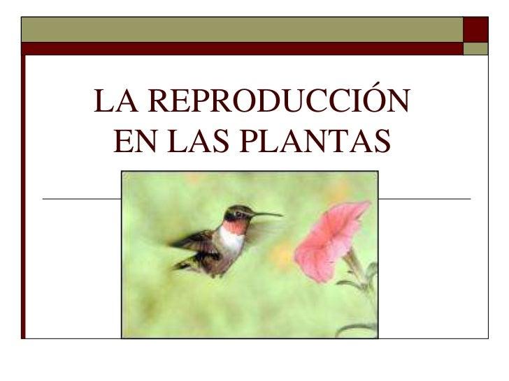 LA REPRODUCCIÓN EN LAS PLANTAS