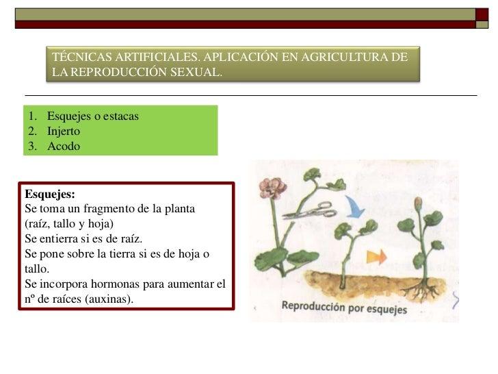 Ejemplos de plantas que se reproducen sexualmente yahoo