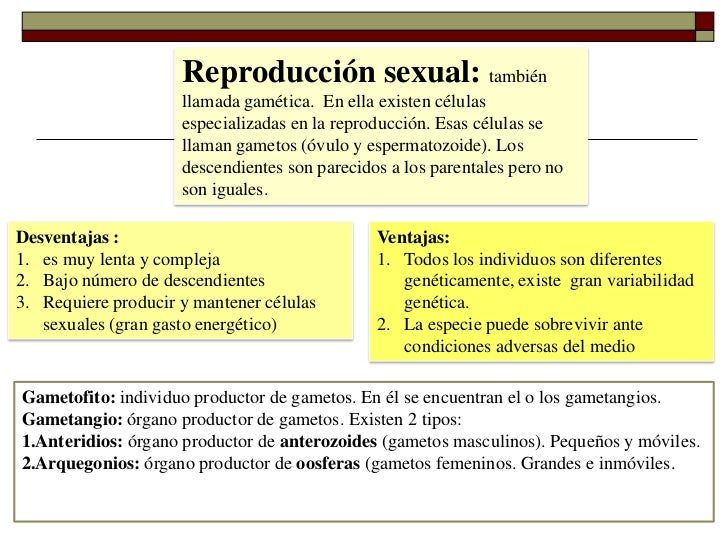Reproduccion sexual y asexual resumen