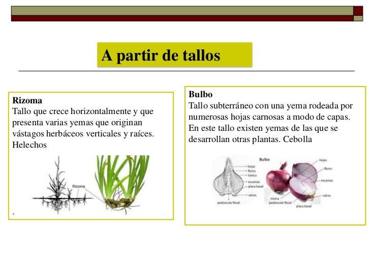 Cuales son los tipos de reproduccion sexual de las plantas