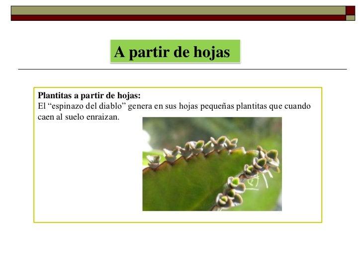 Anturios reproduccion asexual de las plantas