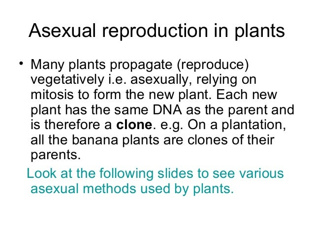 Why is mitosis a form of asexual reproduction images 814
