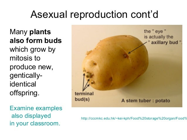 Cite and define examples of asexual reproduction cells