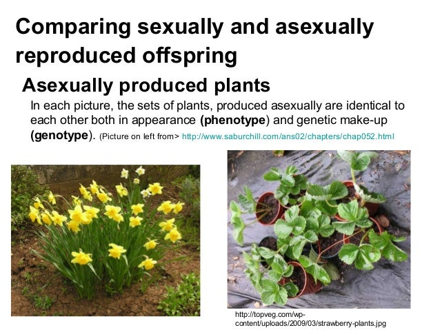Explain how plants reproduce asexually